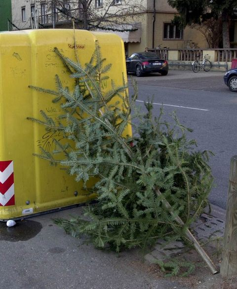 Albero Di Natale Usato.Via Gli Addobbi Si Ricicla Https Www Seab Bz It Sites Default Files Field Image Natale Jpgseab